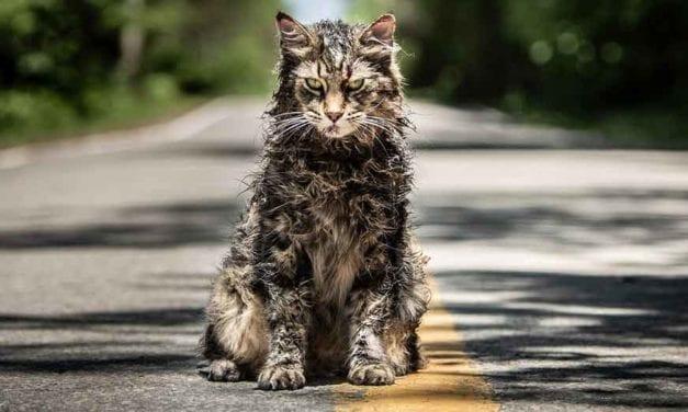 Første billeder fra Pet Sematary (2019)